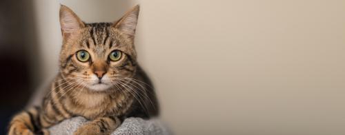 略奪愛できる猫の待ち受け画像